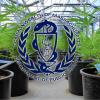 Starting a Marijuana Dispensary in Massachusetts – A Medical Marijuana Attorney's Notes